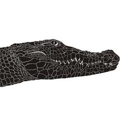 Crocodile head vector image vector image