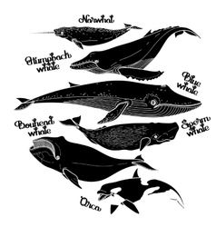 Collection of graphic whales vector image