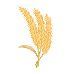 eco wheat icon realistic style vector image