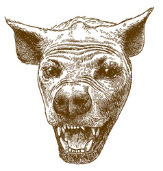 Engraving of spotted hyena head vector