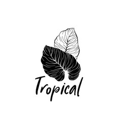 palm leaves hand drawn logotype template vector image