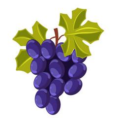 Winemaking grape bunch berry cluster vine vector