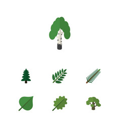 Flat icon bio set of alder spruce leaves park vector