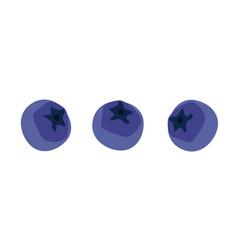 Blueberries set vector