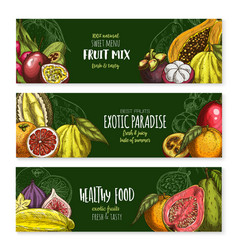 Banners exotic fruits mix for menu vector