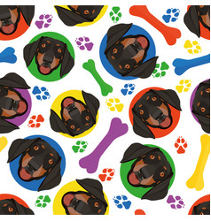 Colorful and playful dachshund vector