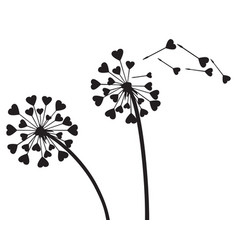 love dandelion with hearts vector image