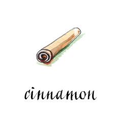 Watercolor cinnamon stick vector