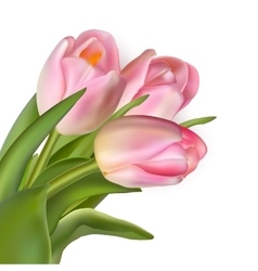 Beautiful bouquet of pink tulips EPS 10 vector image