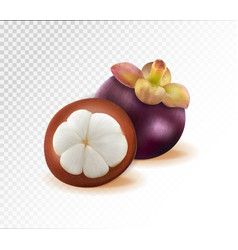 mangosteens queen of fruits mangosteen on vector image