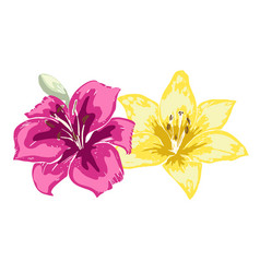 two beautiful lily flowers of big lilies isolated vector image