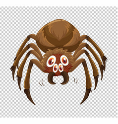wild spider on transparent background vector image