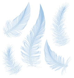 blue feathers vector image