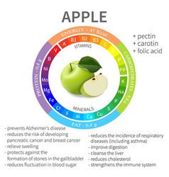 Beneficial properties and nutrients in apple vector