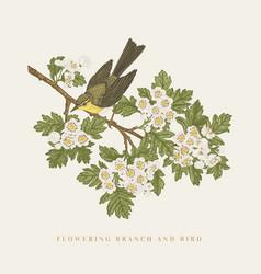 bird on a flowering branch vector image