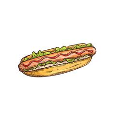 Hotdog sketch isolated bun and sausage vector
