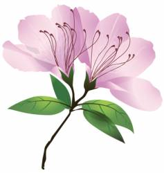 Plants and flowers azalea blossom vector