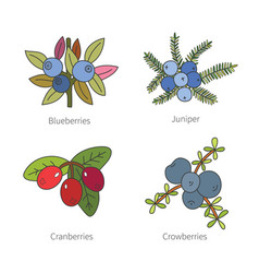 Set of doodle pied berries isolated on white vector