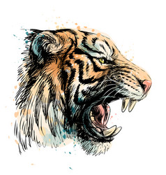 sketchy portrait a tiger on a white background vector image
