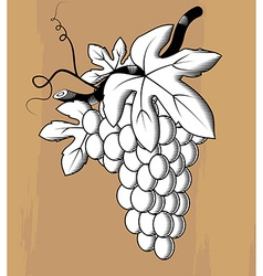 Woodcut styled bunch of grapes vector image