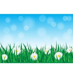 daisies in the grass vector image