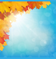 realistic maple leaves corner sun sky vector image vector image