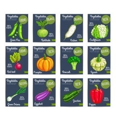 Organic farm vegetables price cards vector image vector image