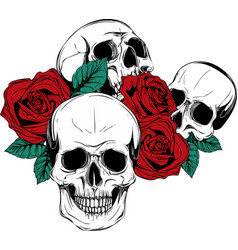 A human skull with roses on white background vector