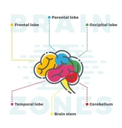 Brain Zones Scheme Colorful Infographics of vector image