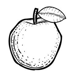 Cartoon image of apple vector
