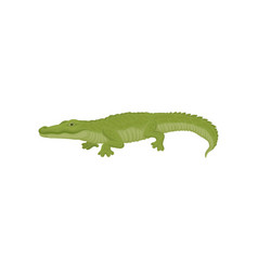detailed flat icon of green crocodile vector image