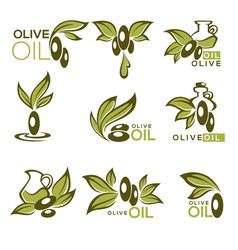 green olive and oil collection of logo vector image