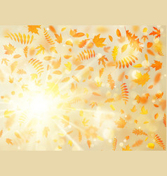 beautiful autumn background with maple autumn vector image