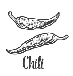 Chili vintage engraved for vector