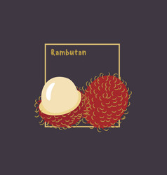 hand drawing rambutan with slice on dark vector image