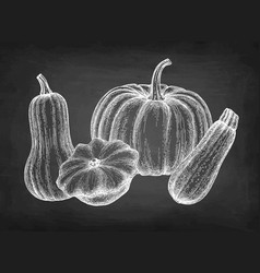 Ink sketch squashes vector