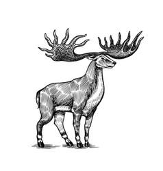 irish elk or giant deer or great horn prehistoric vector image