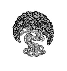 graphics bonsai tree curve trunk big crown vector image vector image