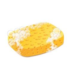 Sponge vector image