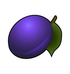 Plum fruit isolated on white background vector image