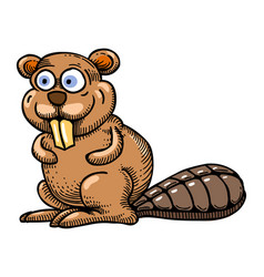 Cartoon image of beaver vector