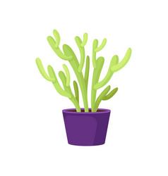 green pencil cactus in purple ceramic pot vector image