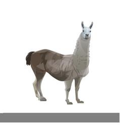 Llama side view vector