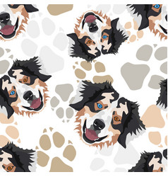 Pattern dog paws australian shepherd vector