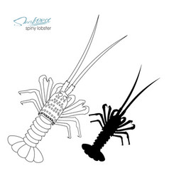 silhouette spiny lobster linear silhouette spiny vector image