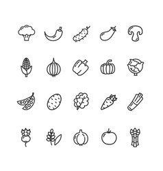 vegetables food black thin line icon set vector image
