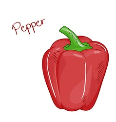 isolated cartoon fresh hand drawn red bell pepper vector image vector image