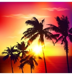 Palm silhouettes on summer sunset vector