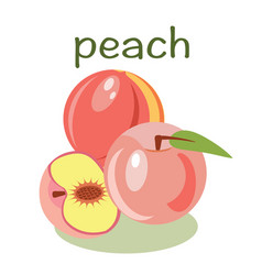 peach isolated in flat style Healthy food vector image