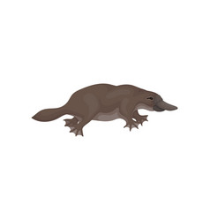 Detailed flat icon brown platypus side vector